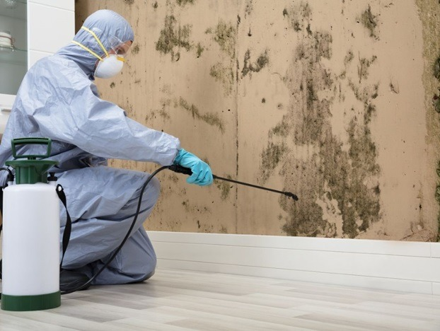 Some Basic Facts about Mold Remediation